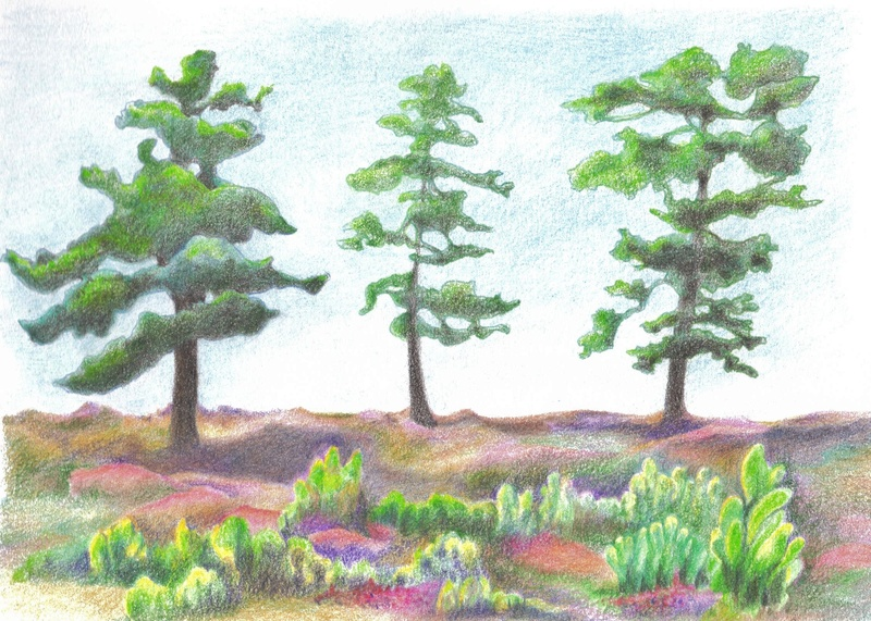 Heather and pines, Arun